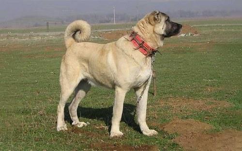 مقایسه تغذیه سگ سرابی با قدرجونی