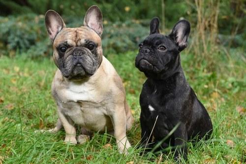 مقایسه سگ نر و ماده در چه چیز هایی است؟