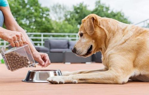 خرید خوراکی مفید برای سگ