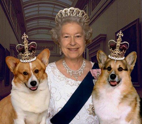 سگ های انگلیسی
