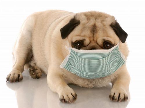نشانه های بیماری های عفونی سگ به چه صورت است؟