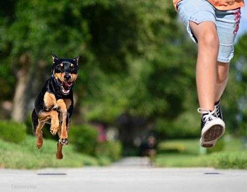 علائم سگ هراسی و یا Cynophobia