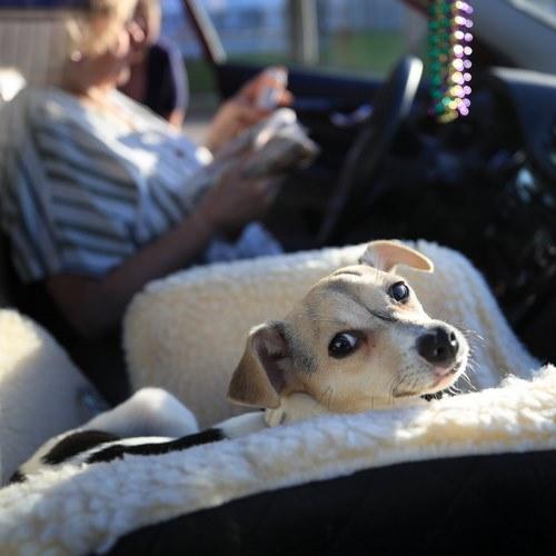 سفر حیوانات خانگی با اتومبیل شخصی