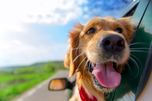 شرکتی برای انجام ورود و خروج حیوانات خانگی