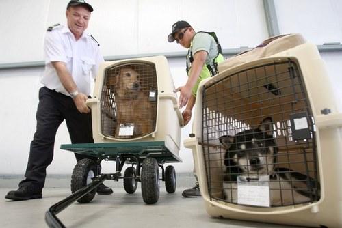ورود و خروج حیوانات خانگی با چه وسایل نقلیه ای ممکن است؟