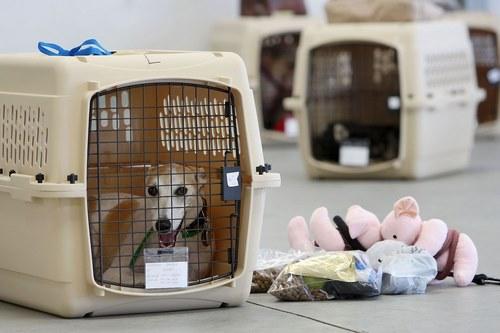 قفس مناسب برای ورود و خروج حیوانات خانگی