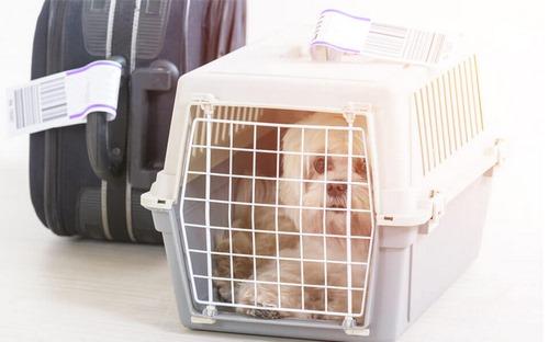 ورود و خروج حیوانات خانگی