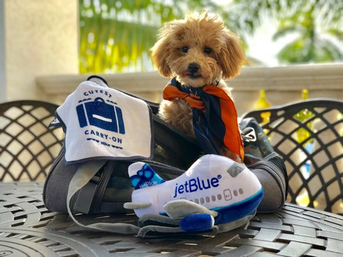 سفر حیوانات خانگی با هواپیما