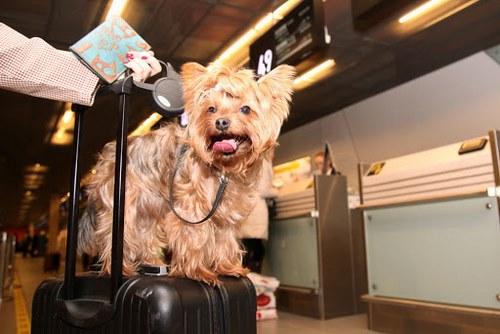 سفر حیوانات خانگی با اتوبوس