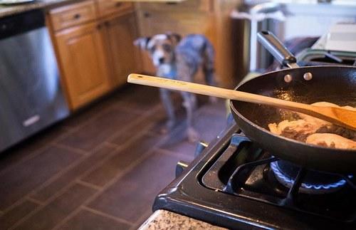 آموزش درست کردن خوشمزه ترین غذا برای سگ