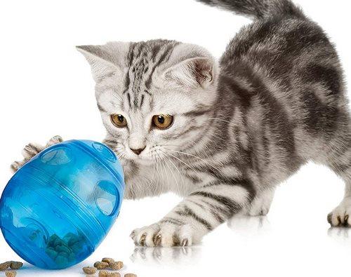 اسباب بازی برای گربه چیست؟