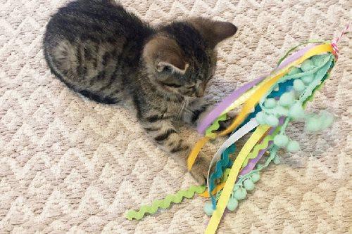 ساخت اسباب بازی گربه در خانه