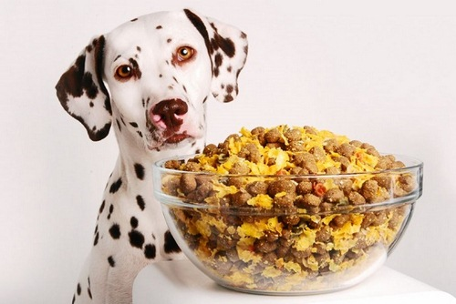 خوراکی مفید برای سگ
