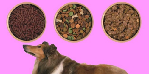 غذای مفید برای سگ های خانگی