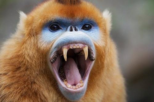 حمله میمون ها در چه مکان هایی بیشتر دیده شده است؟