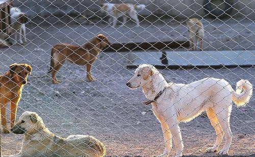 حمایت از حیوانات اردبیل