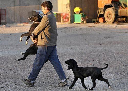 حمایت از حیوانات شهریار