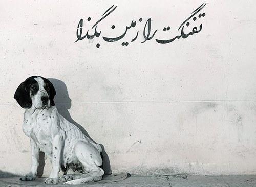 حامی حیوانات