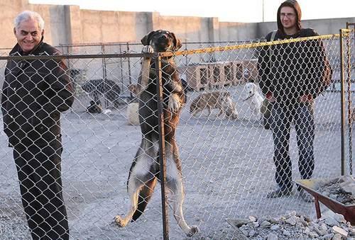 حمایت از حیوانات تهران