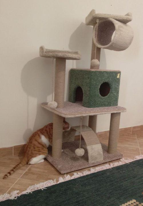 اسکرچر گربه