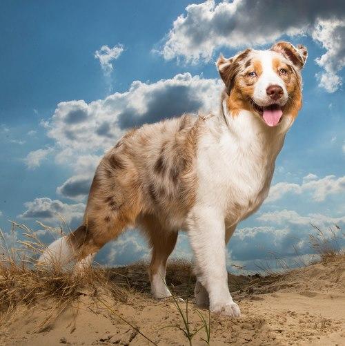 اسامی سگهای بزرگ