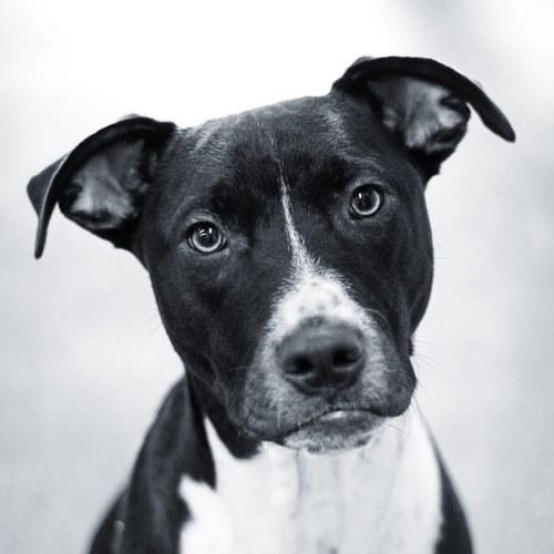 نام سگهای سیاه و سفید