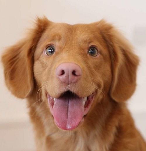 اسامی بی نظیر برای سگ ها