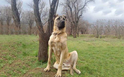 مقایسه سگ سرابی با پژدر