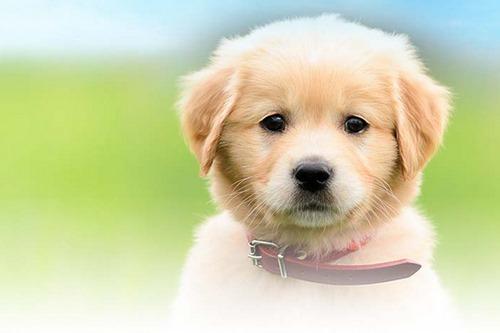 به سگ دو ماهه چی بدیم