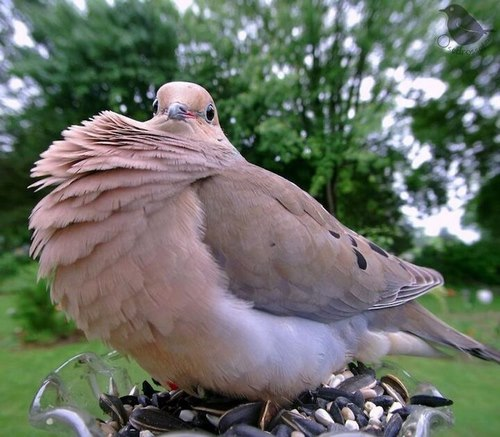 آموزش زبان پرندگان خانگی