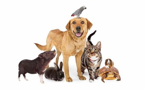 دیسک کمر حیوانات خانگی