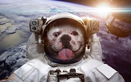 کارتون سگ فضانورد