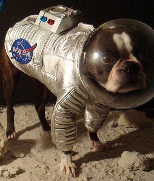 چه سگ هایی را به فضا می فرستند؟