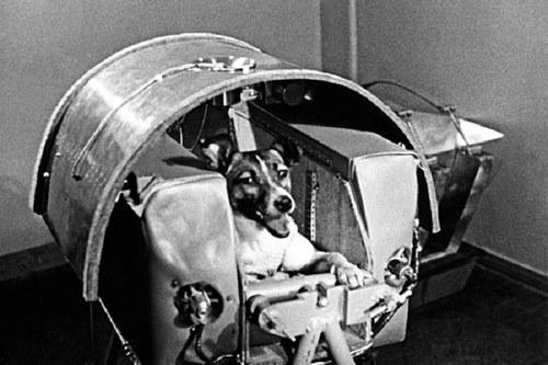اسم سگ های فضانورد چیست؟