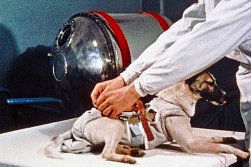 اولین سگ فضانورد