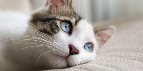 ناشنوایی گربه