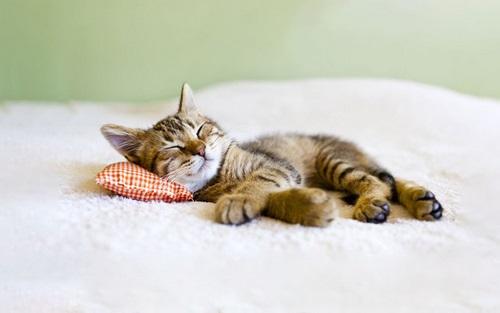 Cat bed sores