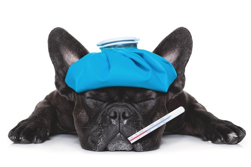 آنفولانزای سگ