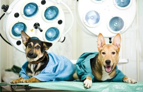 هزینه جراحی سگ