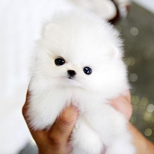 سگ لیوانی چیست؟
