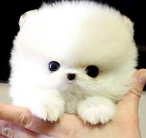 بیماریهای احتمالی سگ لیوانی