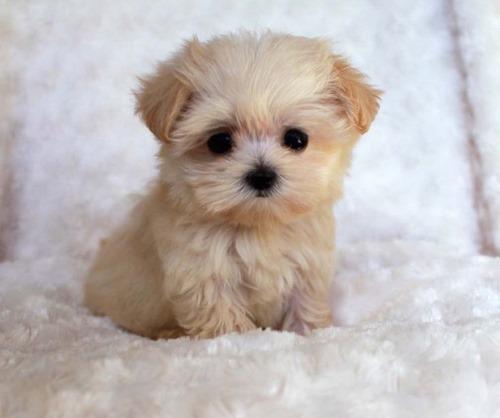 عکس سگ لیوانی