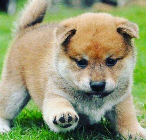 بهداشت سگ های برفی