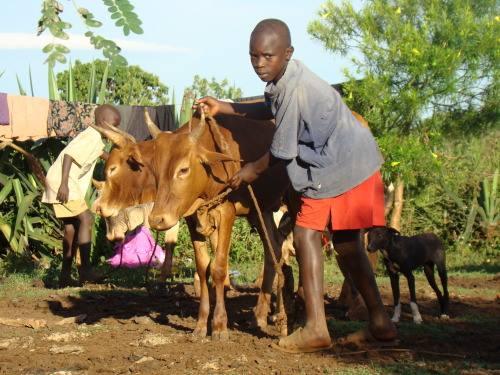 بیماری سل در حیوانات
