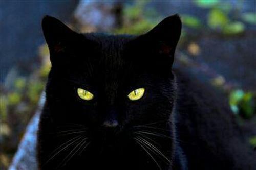 کارتون Gato negro