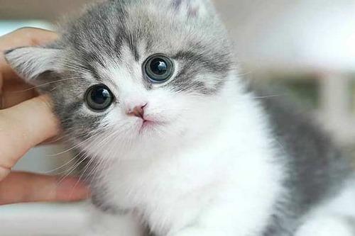 غذای گربه ملوس