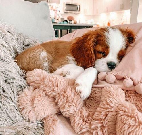 کیوت ترین نژاد سگ چه نام دارد؟