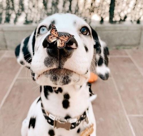 سگ کیوت چیست؟
