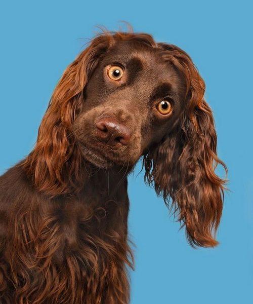 پروستات سگ