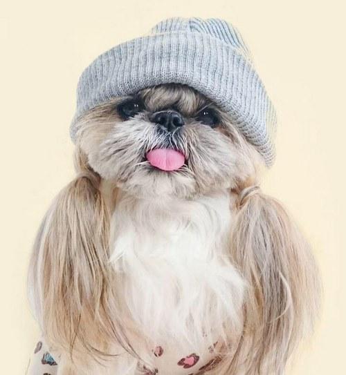 عکس سگ بامزه